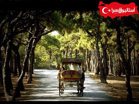 معرفی جزیره بیوک آدا،معروفترین جزیره استانبول Büyükada,درشکه اسب ها در آدالار,حمل و نقل در بیوک آدای